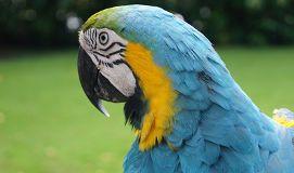 Fotos de Consulta los mejores veterinarios especializados en asistencia animal