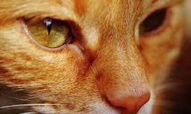 Consulta los mejores veterinarios especializados en asistencia animal Torrejón de Ardoz